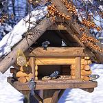 Klassisches Vogelhäuschen
